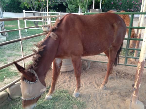 Ocala Mules For Sale Local Classifieds Craigslist Florida